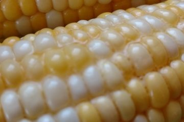 crock-pot corn on the cob
